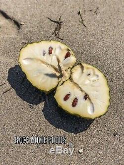 Cherimoya Fruit The Ice Cream Fruit Bulk Box (Actual Fruit) Florida Grown